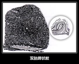 双胎蹄状紋