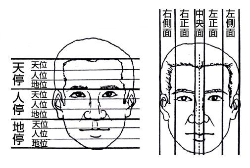 顔面上の横区分と縦区分