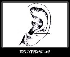 耳穴の下部が広い相