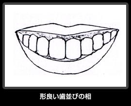 形良い歯並びの相