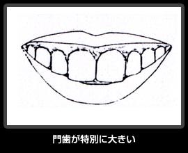 門歯が特別に大きい
